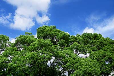 tree_woods_00004